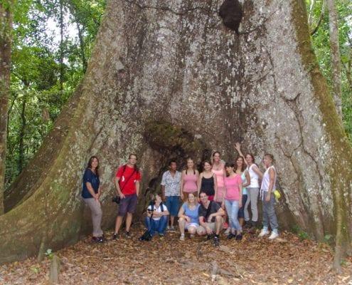Baumriesen Gruppe Peru