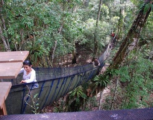 Brücke Baumgipfel Dschungel Peru
