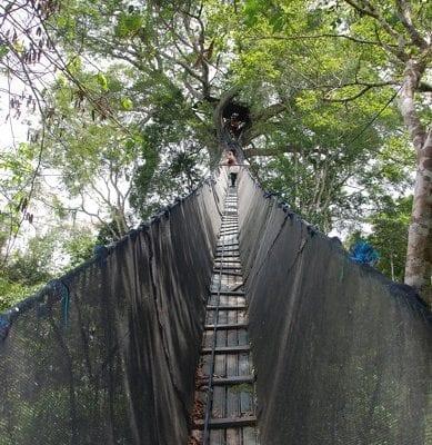 Brücke Dschungel Peru