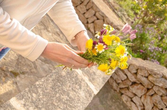 Gepflückte Blumen